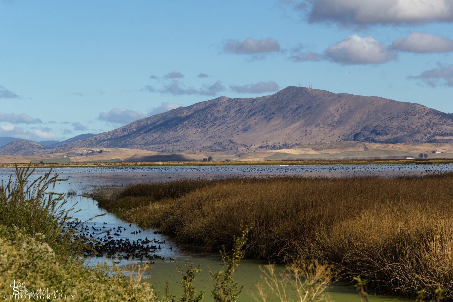 Wetlands are abundant throughout the Klamath Basin NWR Complex. This image shows, Stukel Mountain and wetlands of the Lower Klamath NWR.Image by  Joe Spendolini.