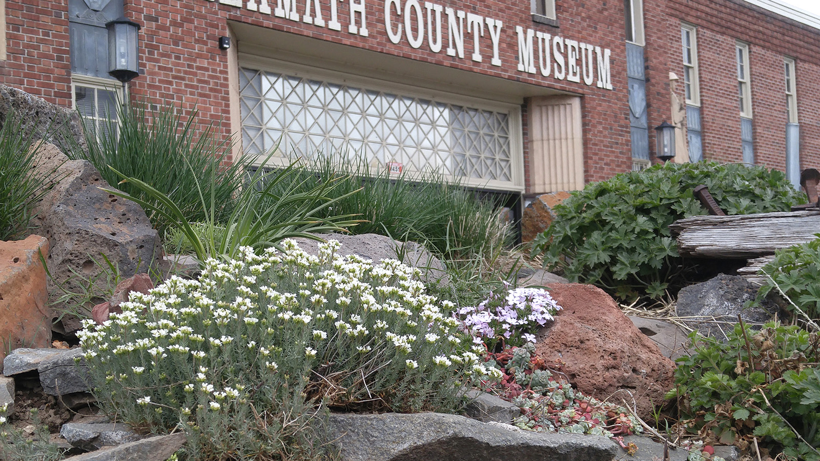 A native plant walk is scheduled for 1 p.m. Sunday, April 22, at the Klamath County Museum in recognition of Native Plant Appreciation Week. Wildflowers shown in this photo include desert combleaf and spreading phlox. (Submitted Photo)