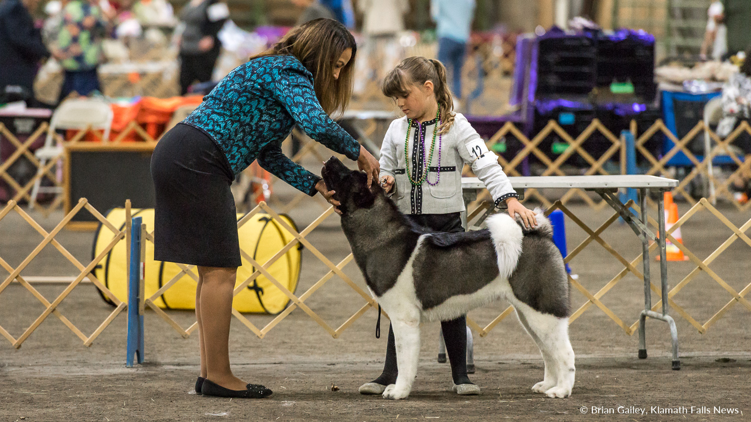 A young showman presents during the Junior Showmanship Competition held Saturday at the Klamath Dog Show. May 12, 2018 (Brian Gailey)