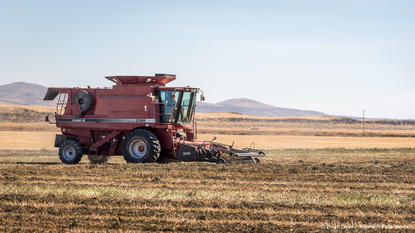 A custom built combine harvest mint leaves near Newell, California. Mint harvested on this farm is destined for tea in the European Union and for use as mint oil for food flavoring. September 27, 2018 (Brian Gailey)