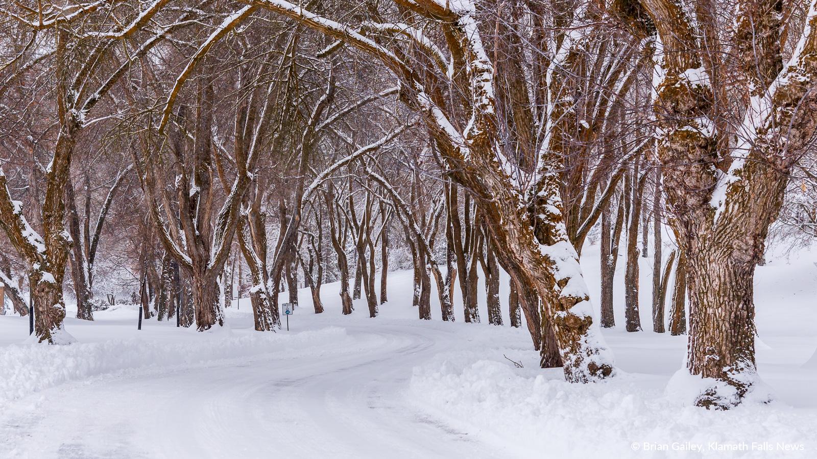 20190213-Snow-KFN-7831.jpg