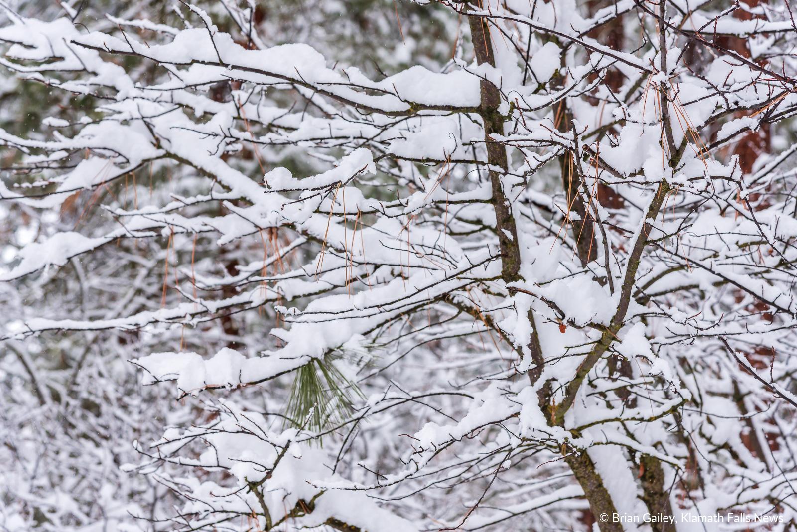 20190213-Snow-KFN-7836.jpg