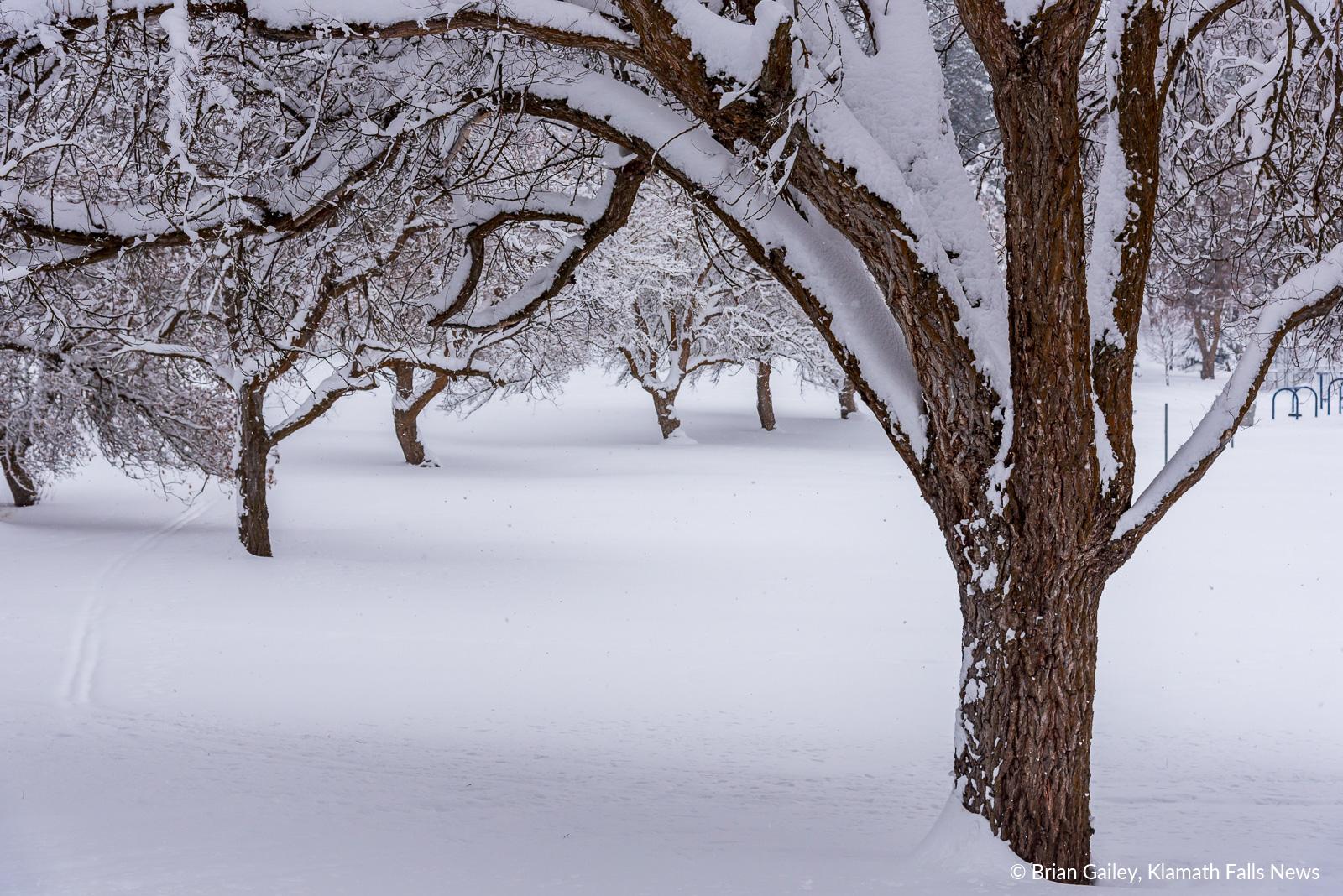 20190213-Snow-KFN-7842.jpg