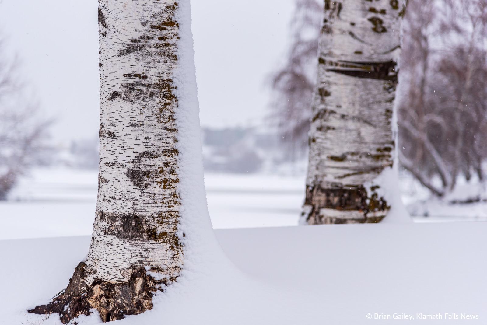 20190213-Snow-KFN-7854.jpg