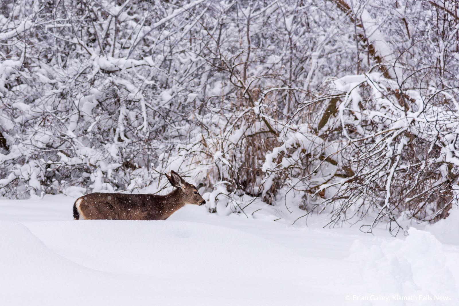 20190213-Snow-KFN-7866.jpg