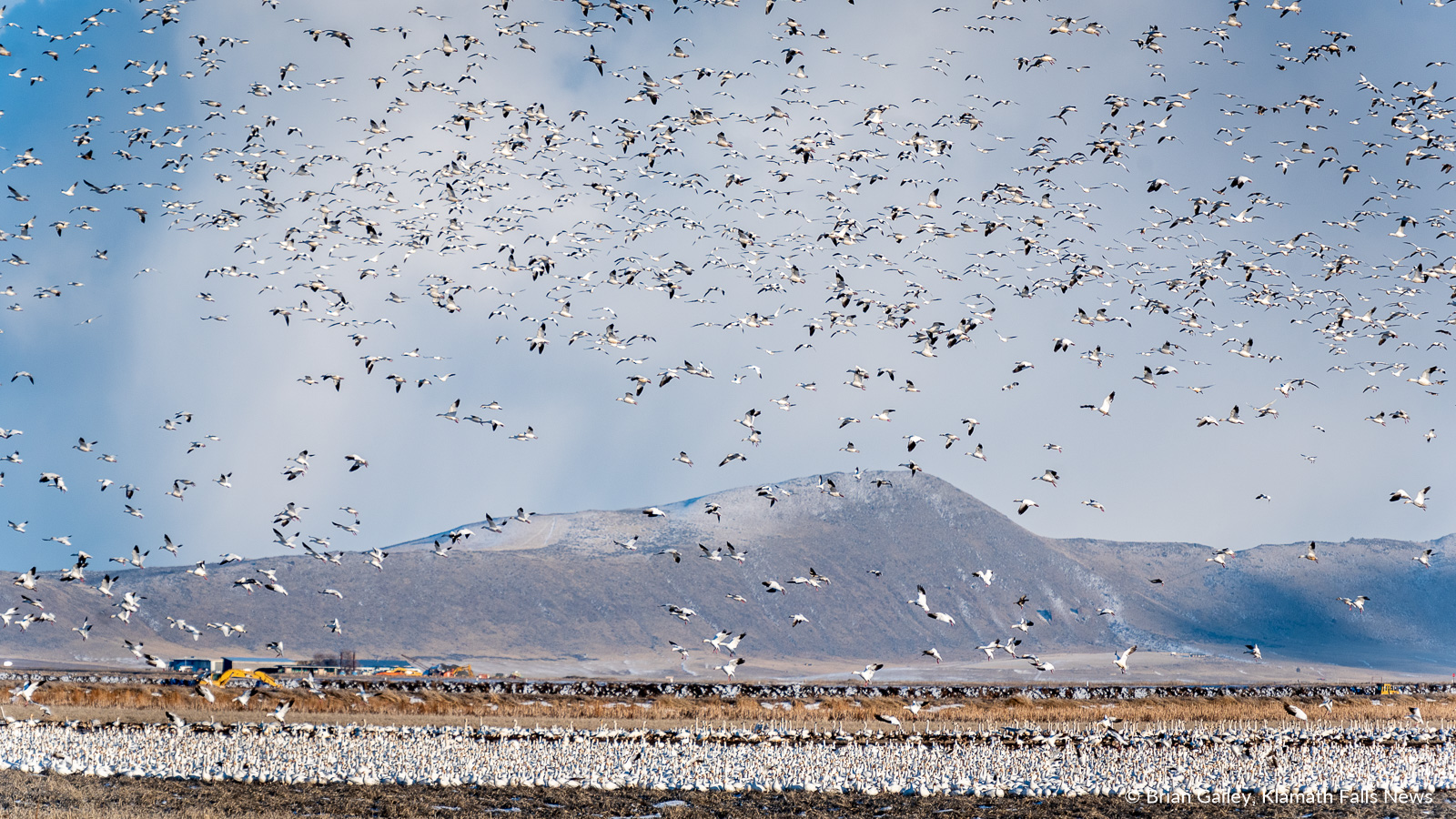 Waterfowl at the Lower Klamath NWR. February 17, 2019 (Image by, Brian Gailey / Klamath Falls News)
