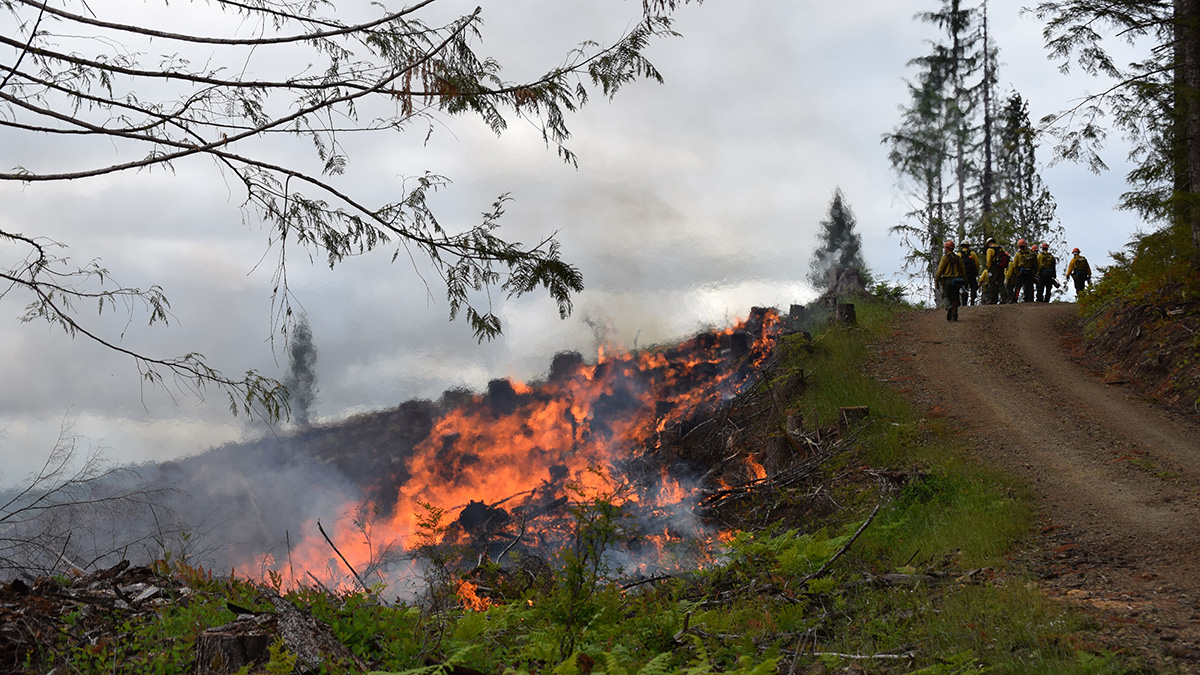 Controlled burns help remove woody fuels from forests after timber harvests. New rules governing the smoke from such forest burns have taken effect in Oregon in time for the spring burning season.  (Oregon Department of Forestry)