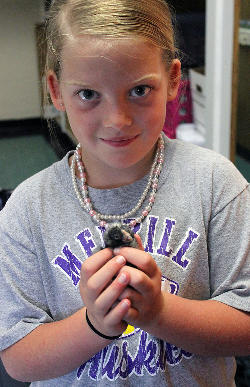 First-grader Josi Teaters holds one of the chicks that hatched in her class at Merrill Elementary School.