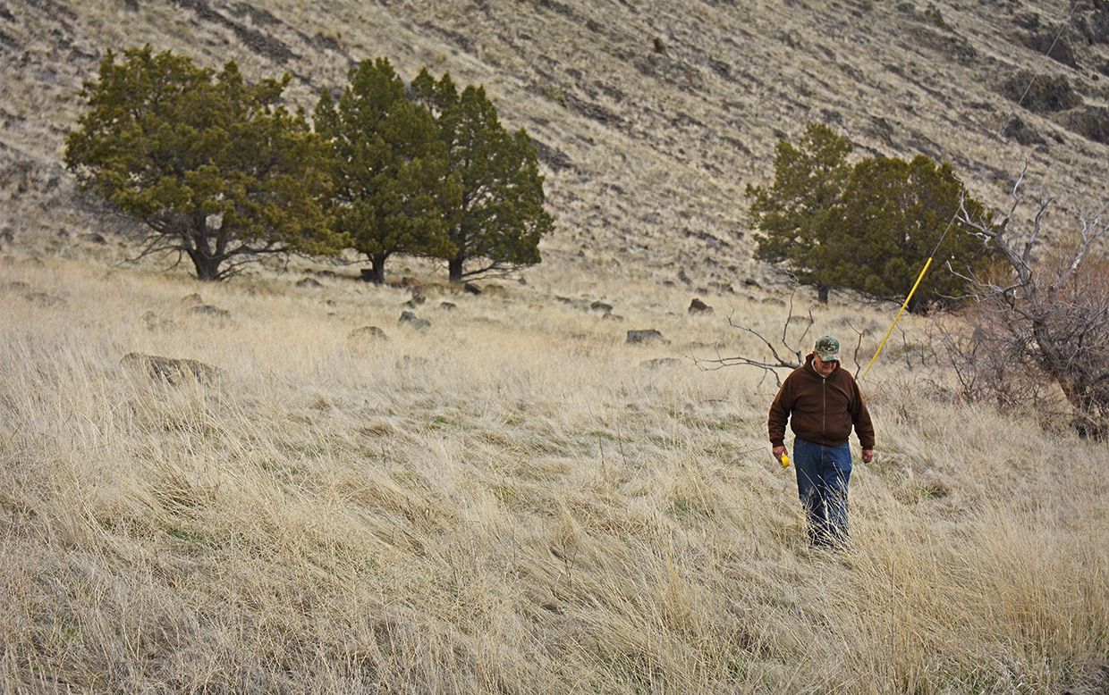 Cy Phillips walks along a rocky hillside on Tule Lake National Wildlife Refuge looking for downed trees containing his kestrel boxes. Credit: Jon Myatt/USFWS