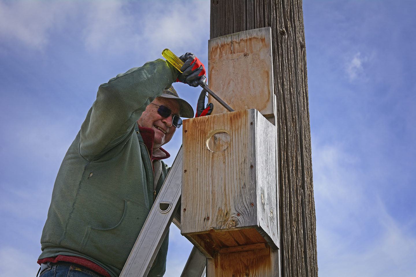 """At the end of the year, contents of a recently used nest box turns to some like concrete, Cy says. """"You have to chip away at it."""" Credit: Jon Myatt/USFWS"""