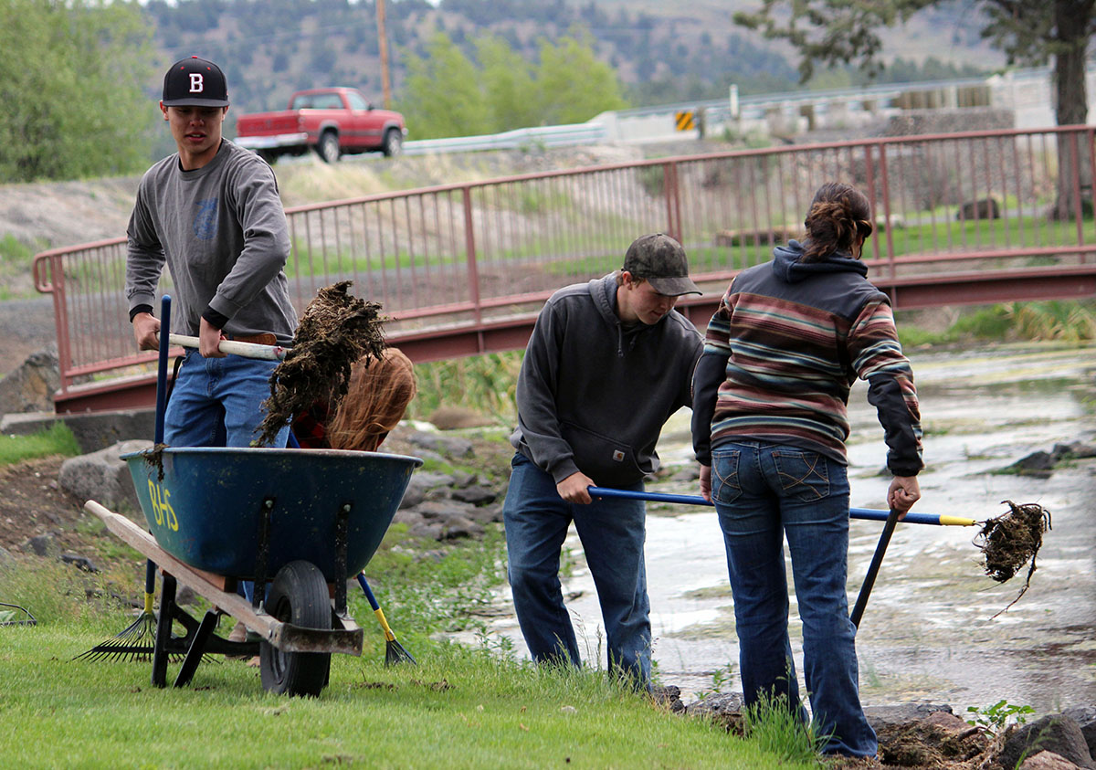 Bonanza Junior-Senior High School students clean moss and watercress from the water of the natural springs at Big Springs Park on Thursday as part of an annual Give Back Day event.