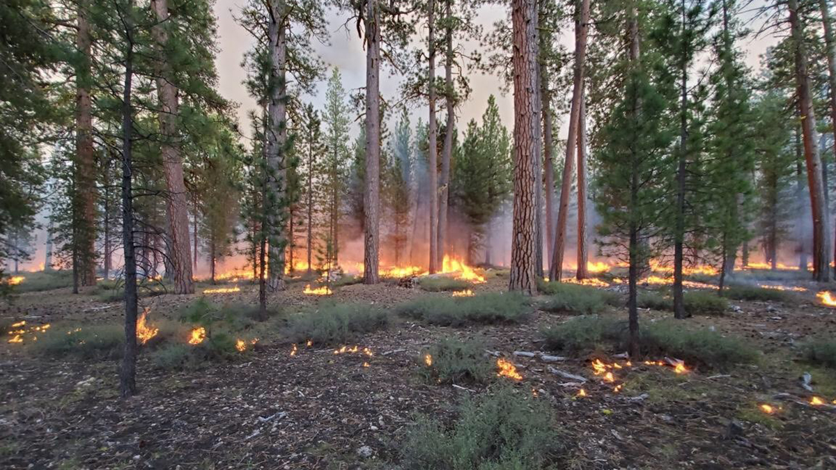 RAC Prescribed fire near Chemult, Oregon on the Chemult Ranger District of the Fremont-Winema National Forest (Image USFS)