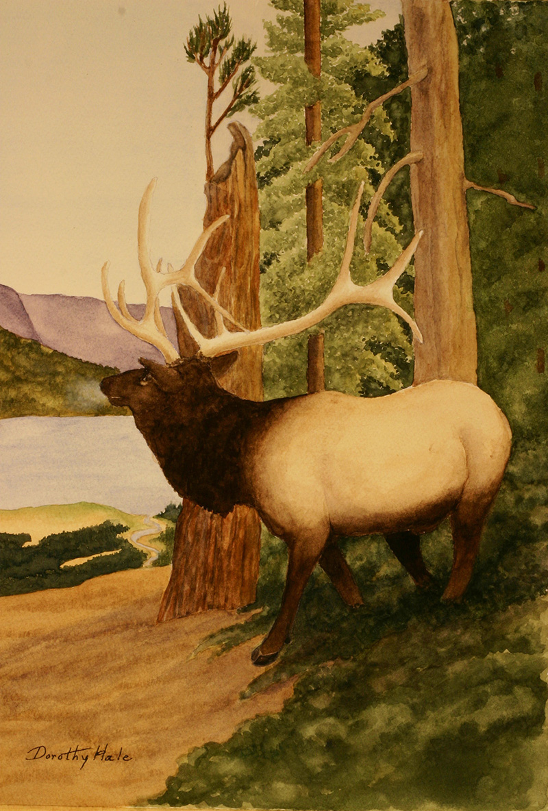 Modoc Gallery - Elk - Hale.jpg