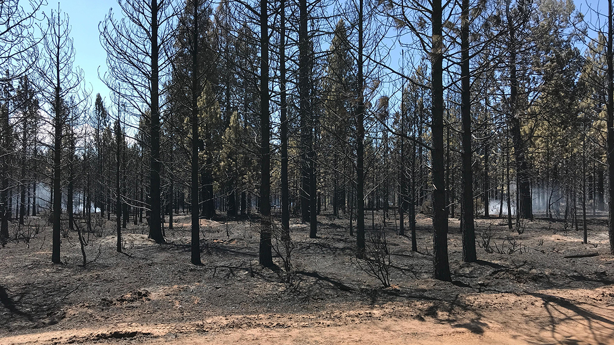 Trees, brush and grasses still smolder inside the fire lines of the #WardFire. (Image, Inciweb)