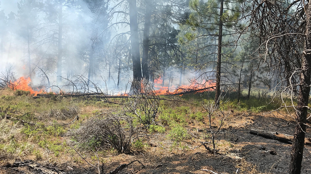 Internal flare up of the Ward Fire. August 13, 2019 (Inciweb)
