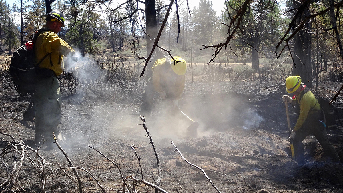 Wildland Firefighters working on the Ward Fire doing mop up operations on hotspots within the containment lines. (Inciweb)