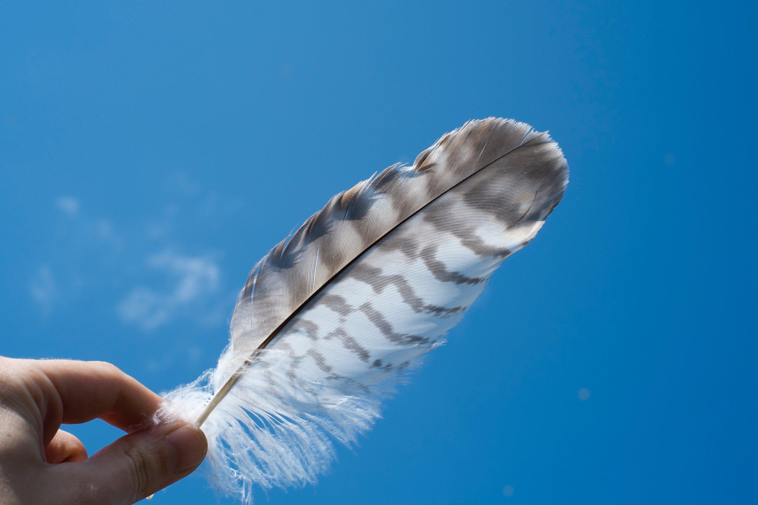 free-angel-card-reading