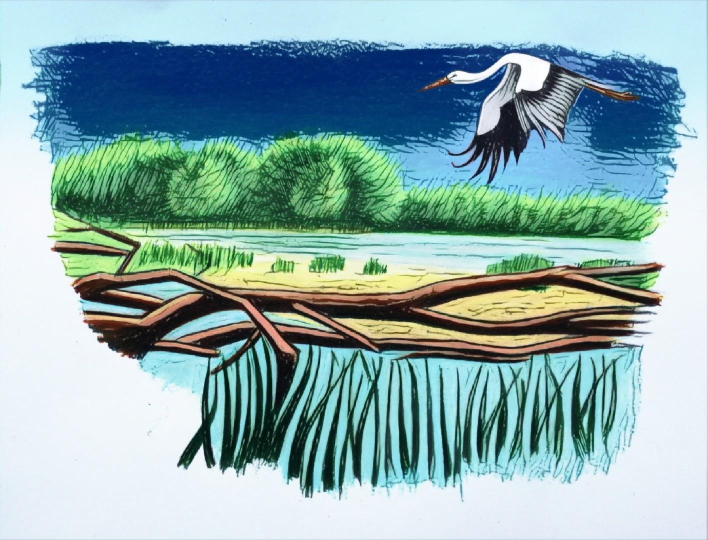 Illustration für Storchenforscher.ch