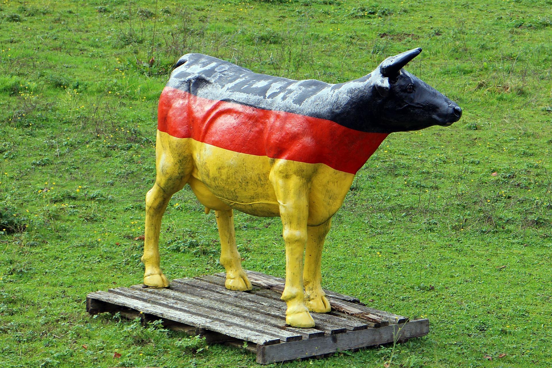 cow-491264_1920.jpg