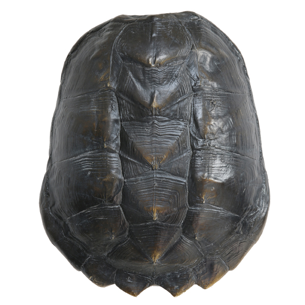 Artifical Black Turtle Shell - RRP €110For enquiries please call us today on +353 1 4534742 or email info@interiorsatelier.ie