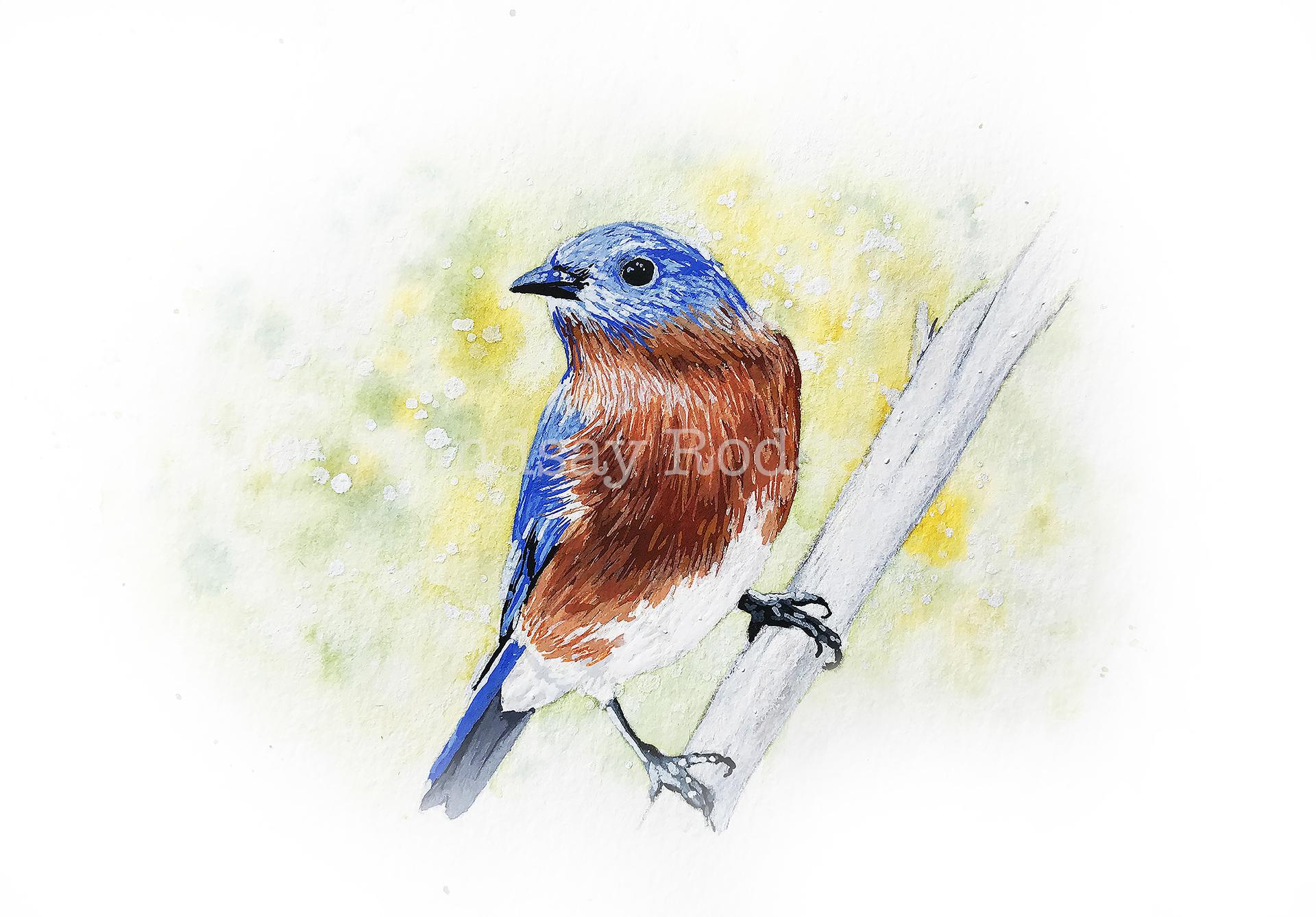 bluebird etsy.jpg