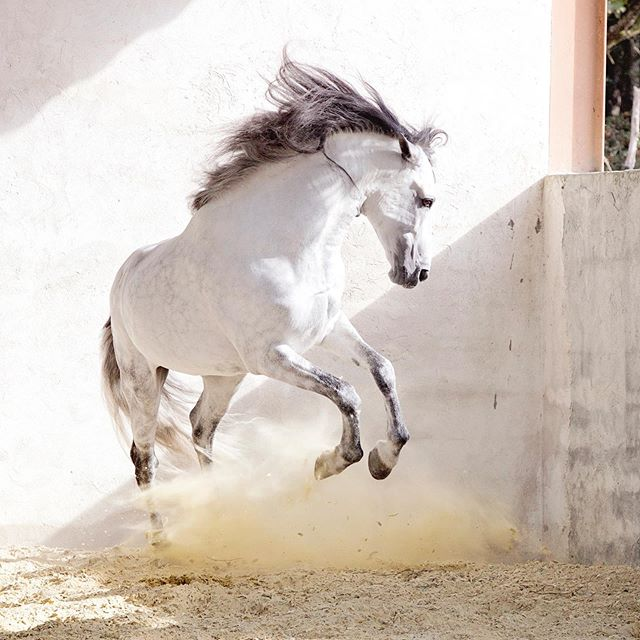 Jumping up for joy today with anticipation on all the fun ahead! Heading to LAX to pick up someone very special and then racing to a fun match of polo! Whoop whoop! This picture was taken in the south of France and Bri he back so many great memories! #simpleefocused #horsegirl #horses #stallion #equinephotography #equestrainlife