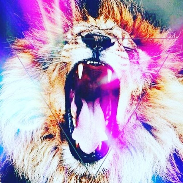 Let them hear you roar. Thanks @consciousboss for the image. 🦁🔥❤️