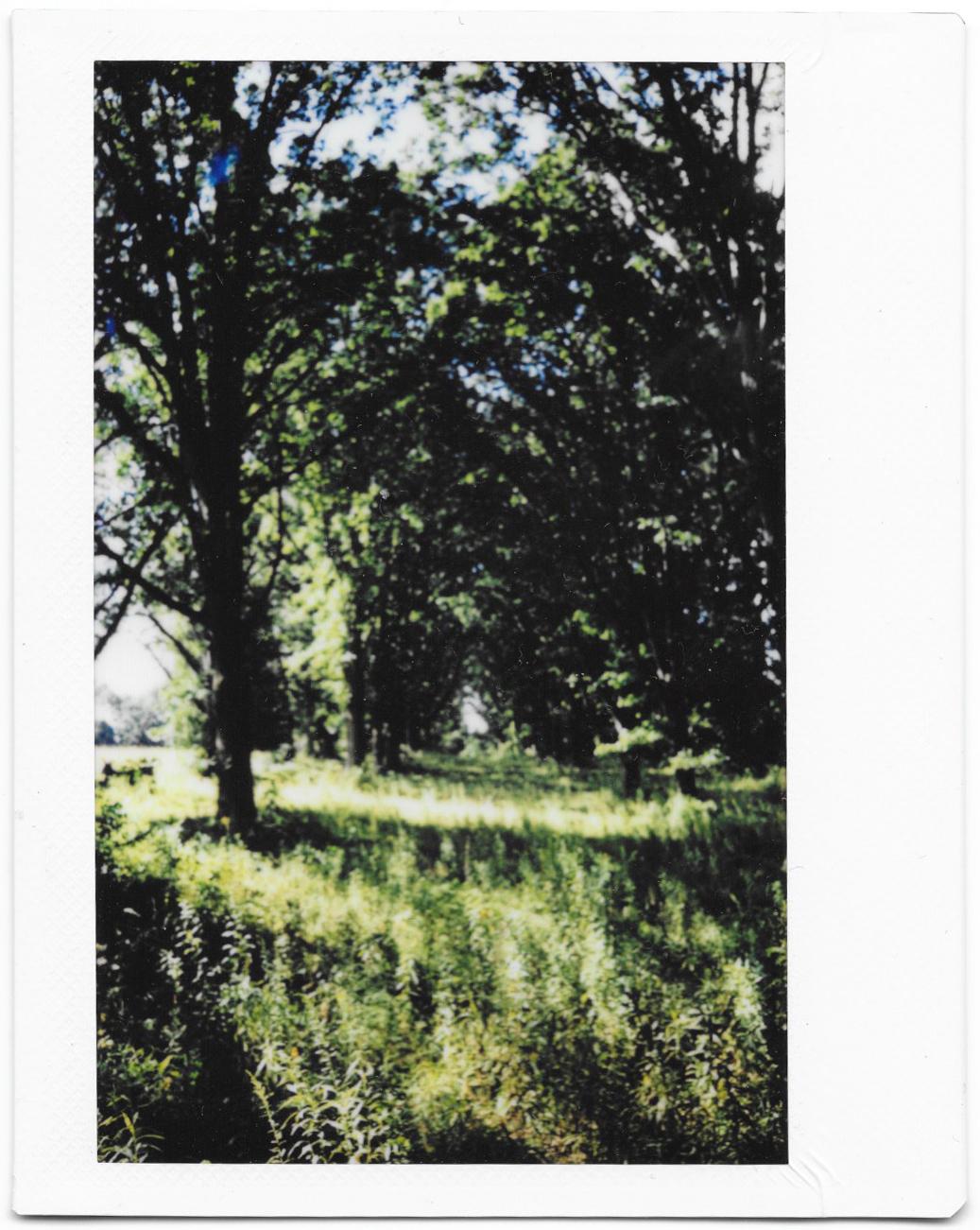 oaktrees.jpg