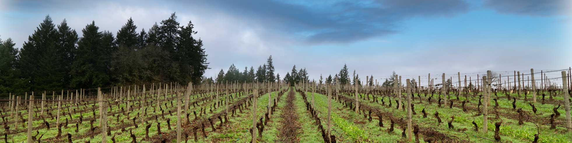 Beaux-Freres_vineyard-middle.jpg