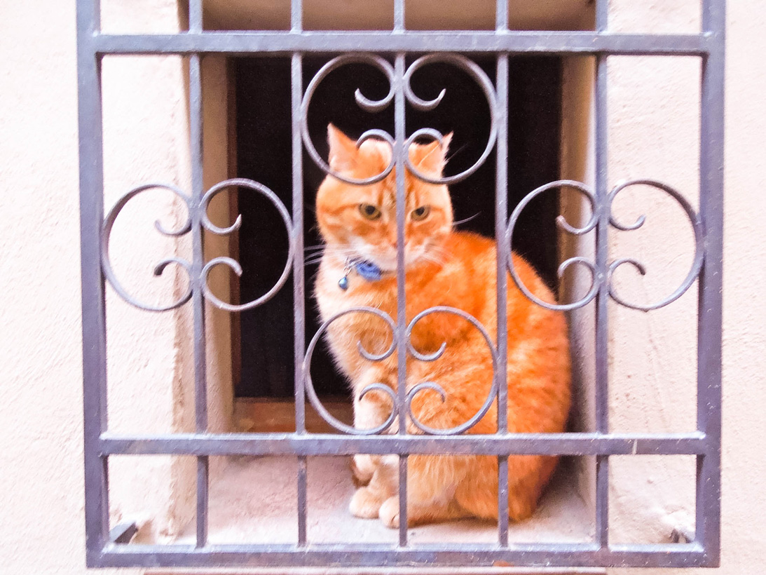 Cat in the window along one of the streets in Montepulciano, Italy