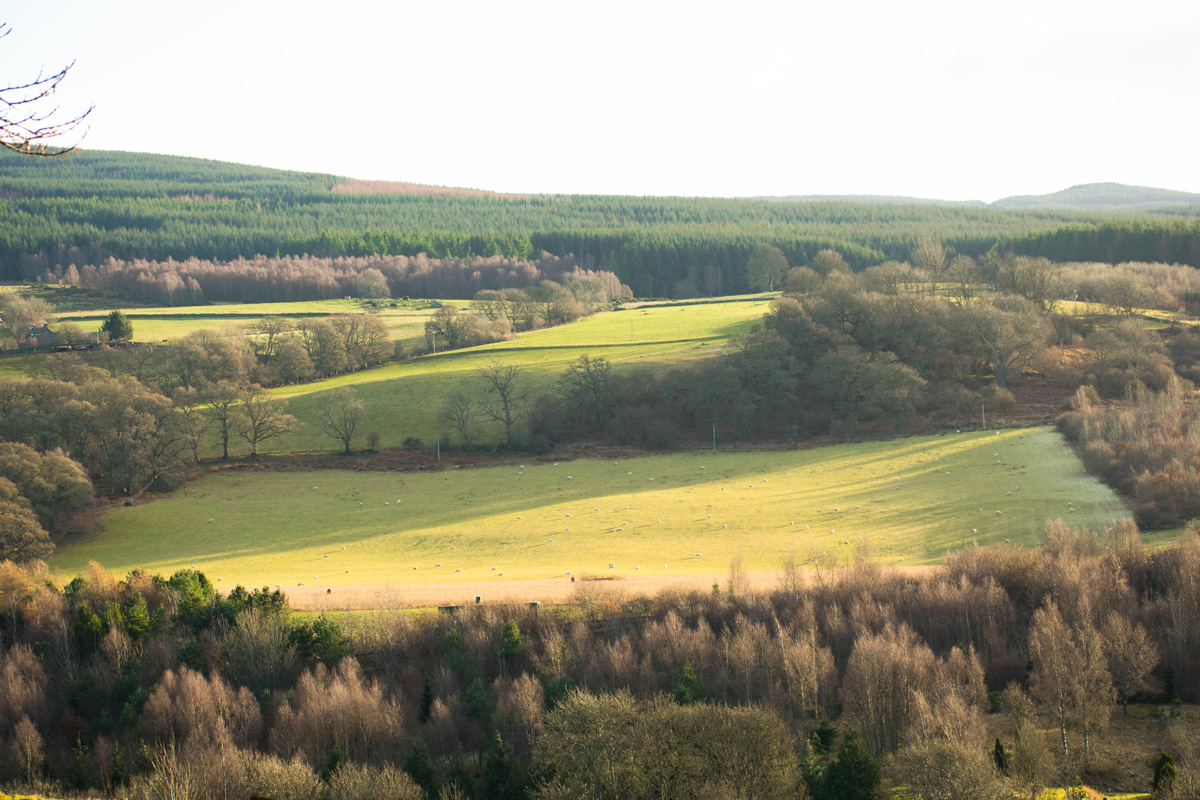 One of the many views from the hill where the Cluny House Gardens reside.