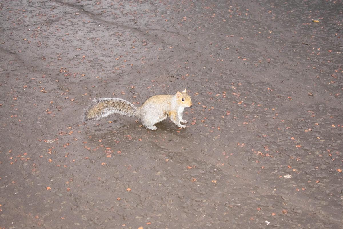 The super-friendly squirrel in Princes Street Gardens