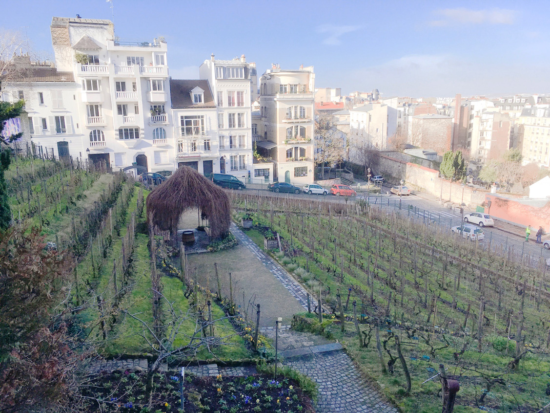 Clos Montmartre - one of two remaining vineyards in Paris right behind Musee de Montmartre!