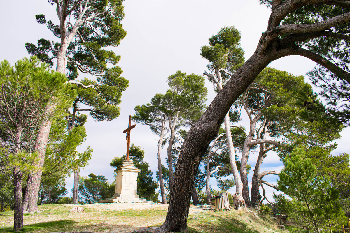 The top of the hill in Bonnieux with cool cedar trees and awesome views