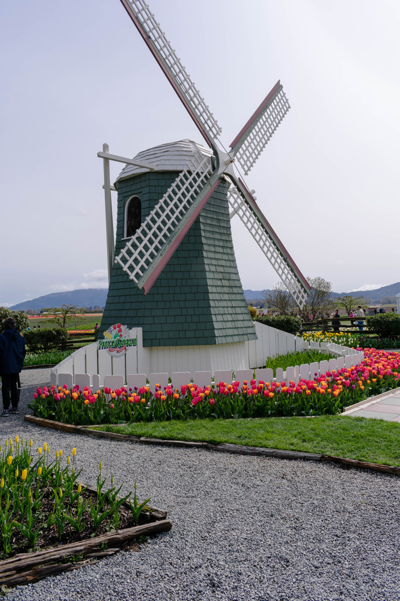 Skagit Valley Tulip Festival Roozengaarde Windmill