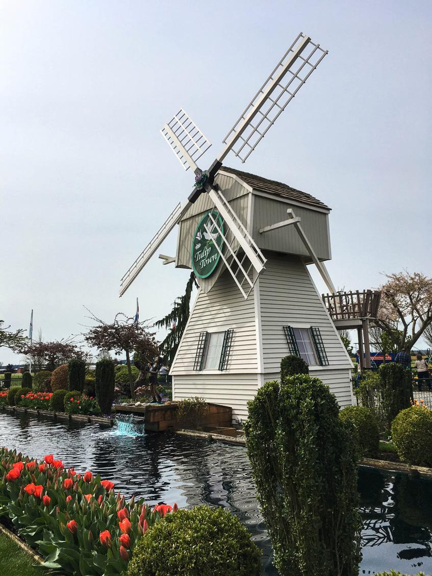 Skagit Valley Tulip Festival Tulip Town windmill
