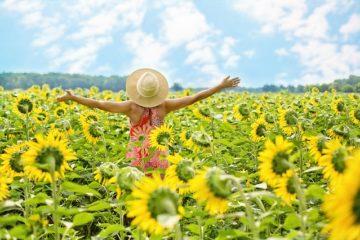 sunflowers-3640938_640-360x240.jpg