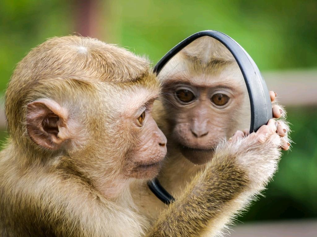 monkey mirror.jpg