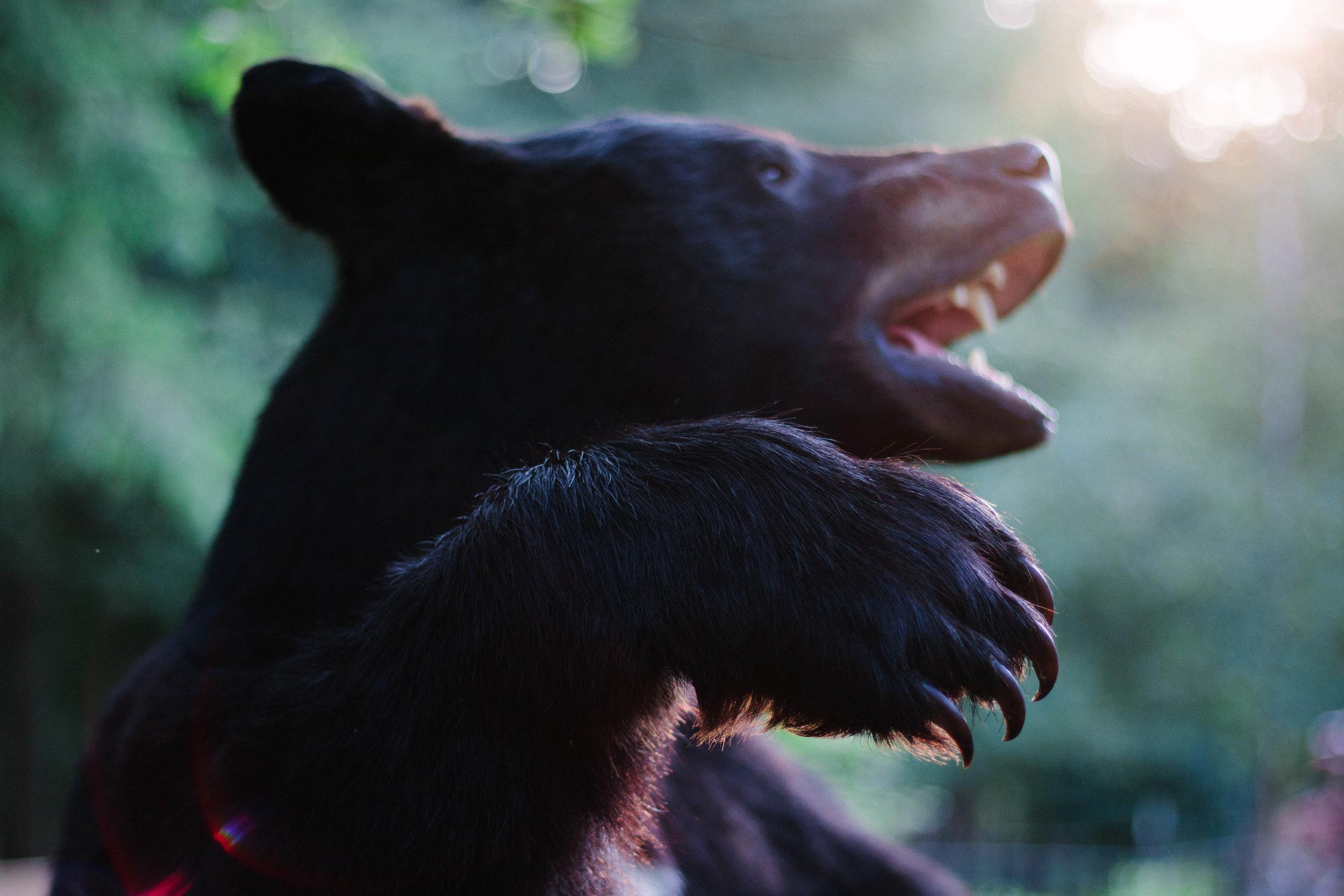 2017 Pannkuk Standing Bear 8.jpg