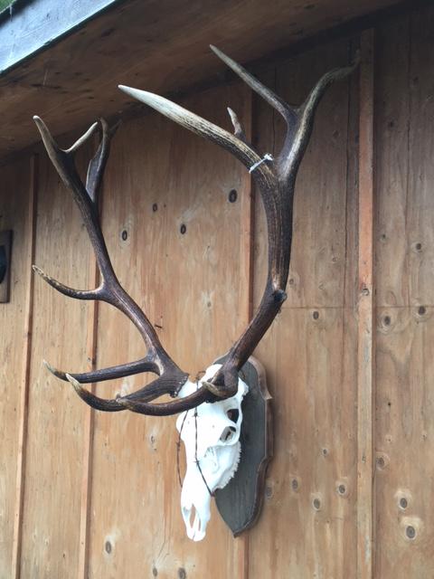 Elk Euro Barnboard Barbed Wire4.JPG