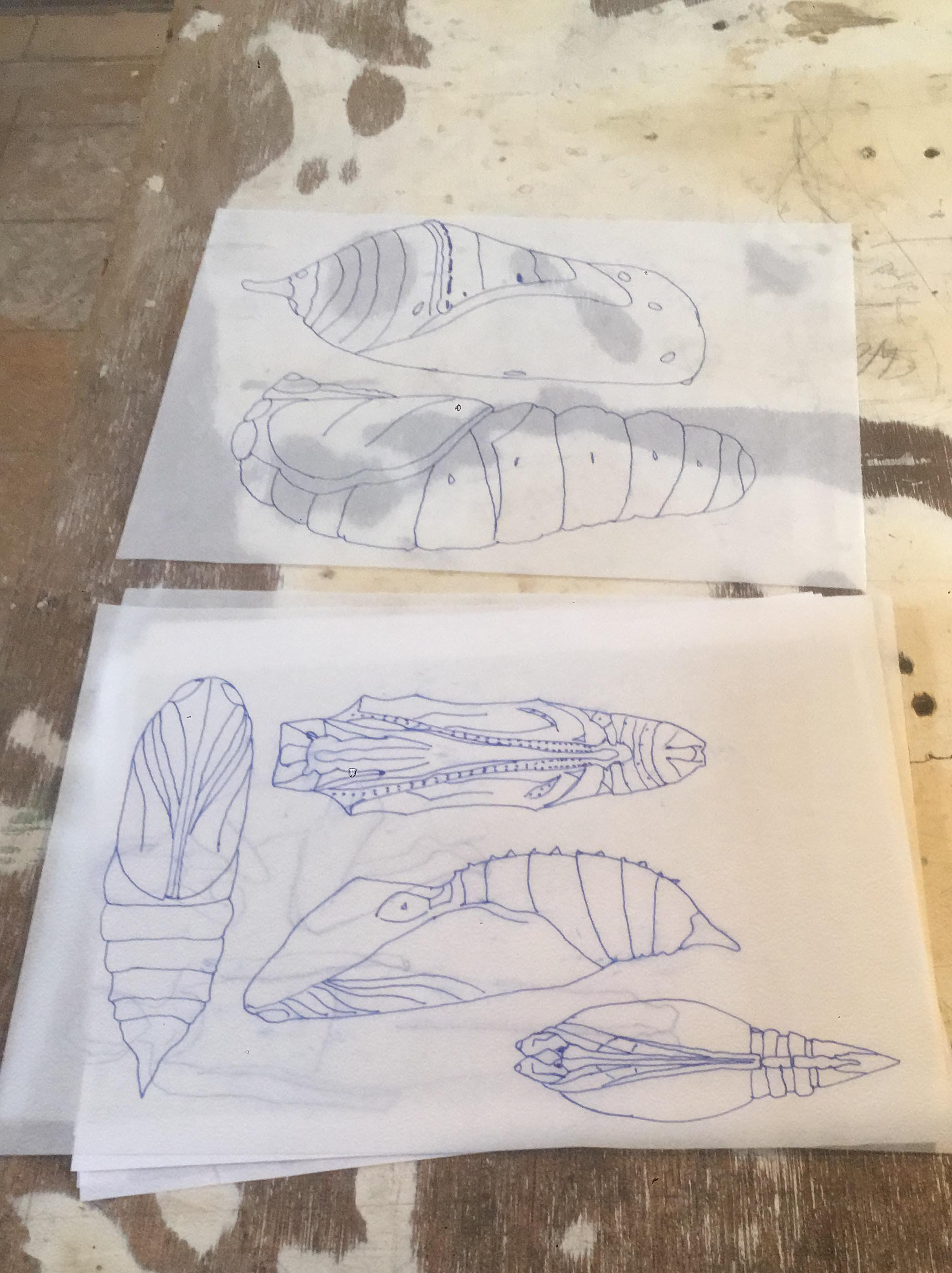 Drawings of various Chrysalis forms for reference.