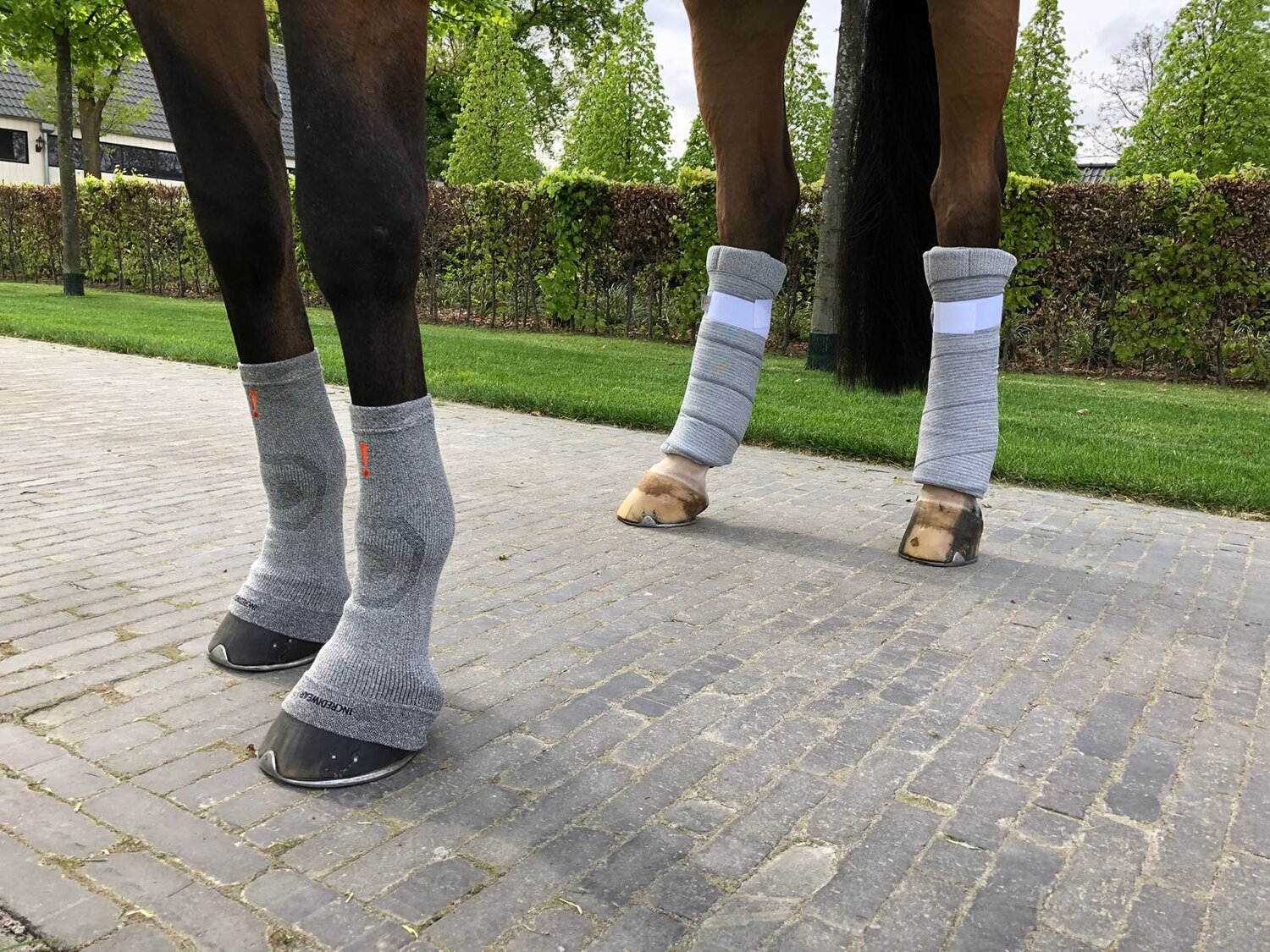 Image result for INCREDIWEAR BEFORE AFTER HORSE