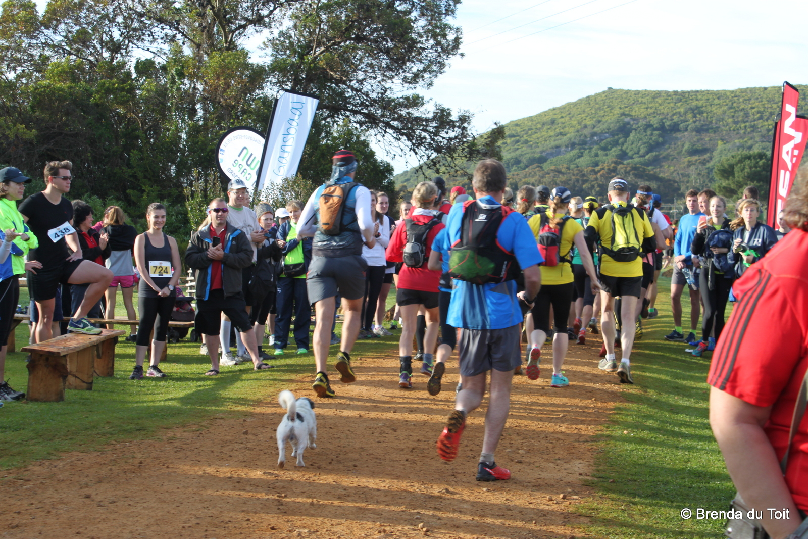Dog following a group on a fun run whilst the crowds cheer them on