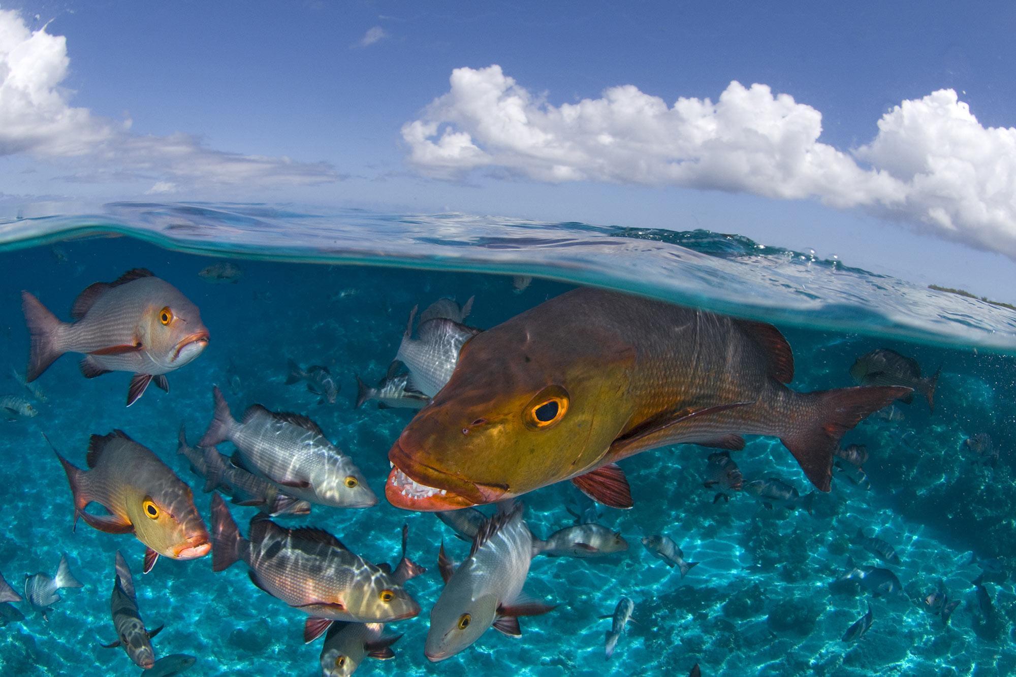 Fish swimming in clean, plastic free water