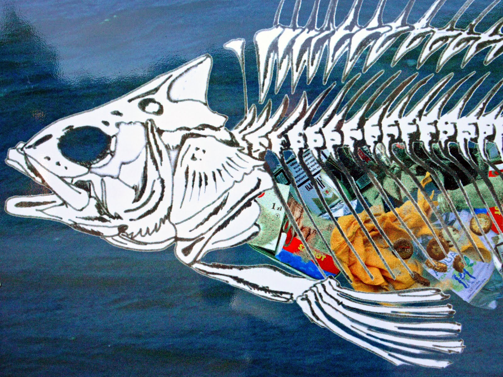 Fish skelleton with loads of plastic in its belly showing the harm of plastic to marine wildlife