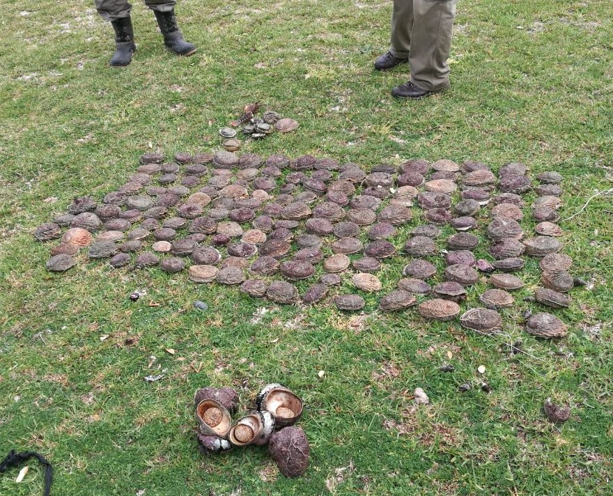 Photo of poached wildlife confiscated from poachers
