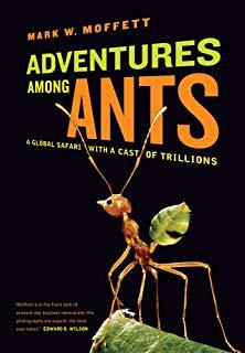 Ants.jpg