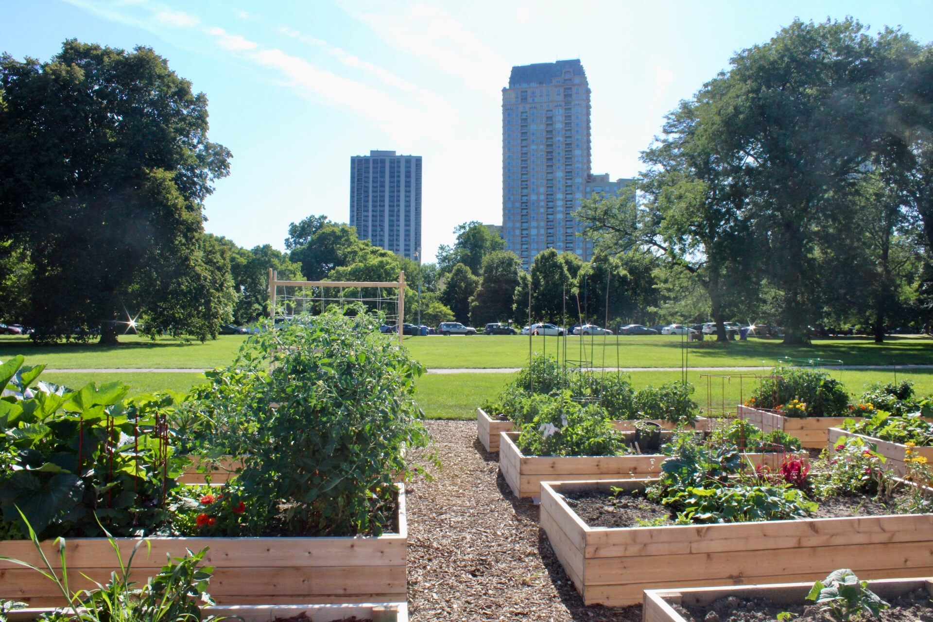 Diversey Harbor Community Garden