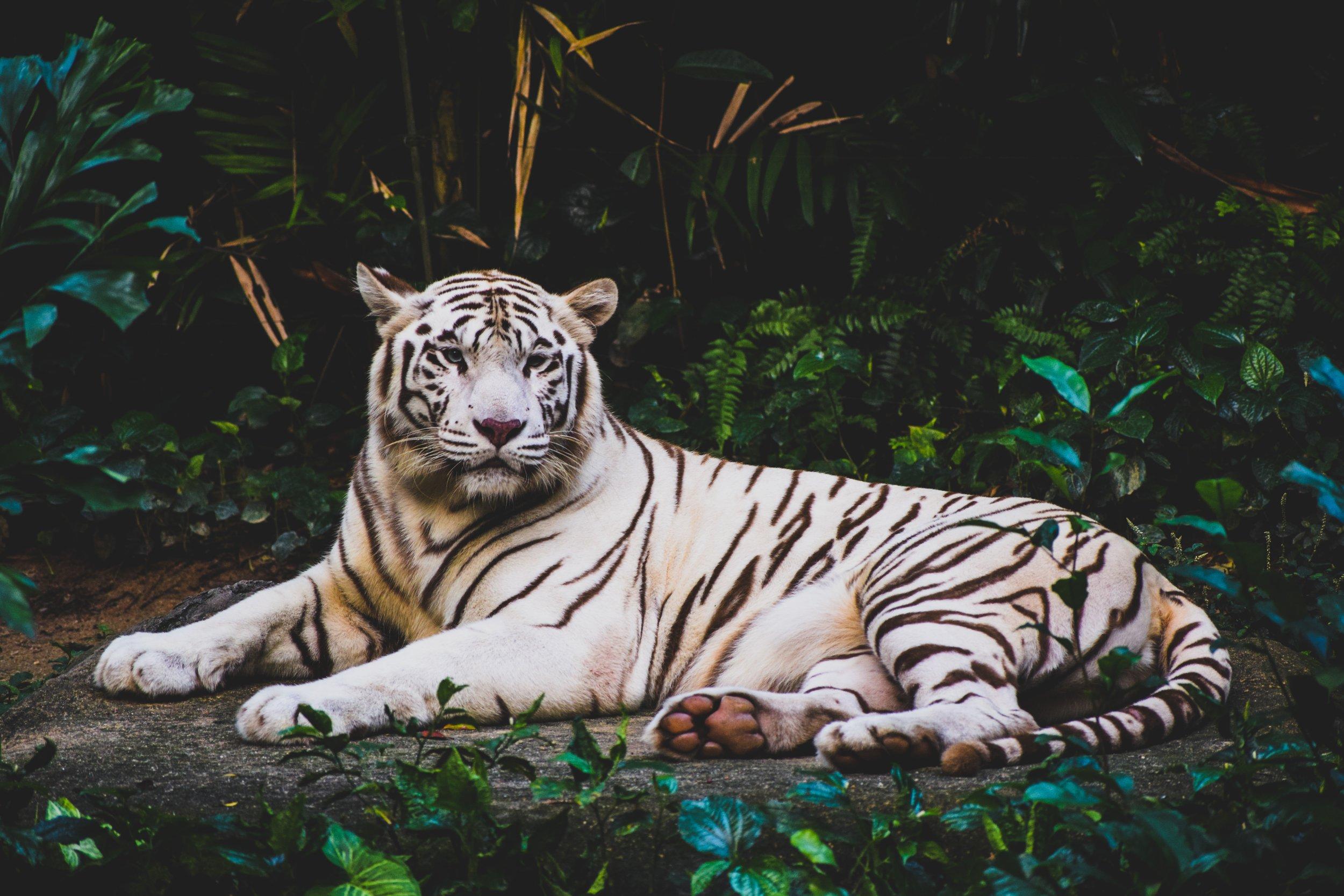 BAiHU  - der weiße Tiger. Gourmet Instant Nudeln