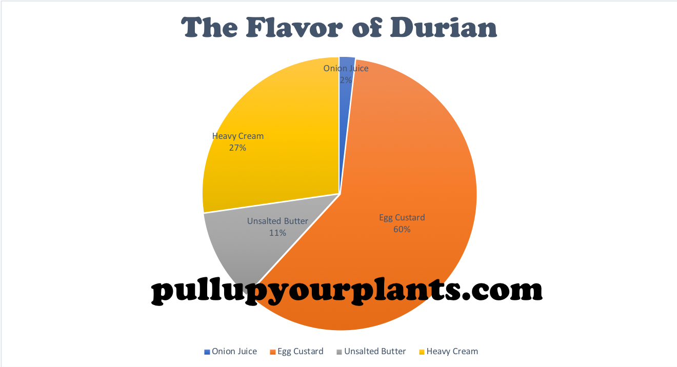 Graph 2: An Empirical Visualization of the Flavor of  Durio zibethinus